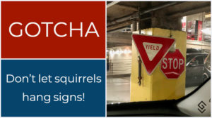Don't Let Squirrels Hang Signs - Gotcha moments July 2018